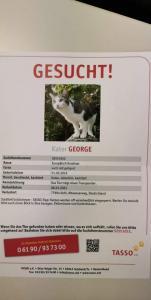 Entlaufen: George in Kehl-Goldscheuer