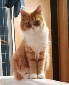 Entlaufen: Garfield in Kittersburg