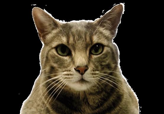 Ohrfield Felidae
